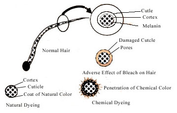 Mechanism Of Hair Dying